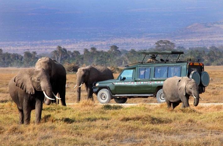 kenya-safari Bespoke luxury travel: tailor-made travel experiences Bespoke luxury travel: tailor-made travel experiences kenya safari