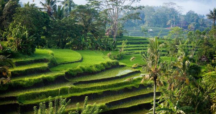 Best Places to Travel in 2015 Best Places to Travel in 2015 Best Places to Travel in 2015 bali nature indonesia sidemen morning hi 262412