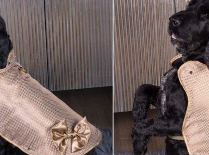 World's Most Expensive 24 Carat Dog Jacket World's Most Expensive World's Most Expensive 24 Carat Dog Jacket most expensive dog jacket 1 420x311