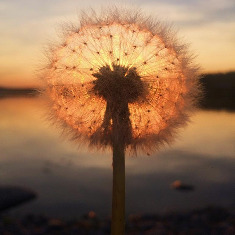 iphone photography The Best iPhone Photography of 2018 49 1st SUNSET Sara Ronkainen 1