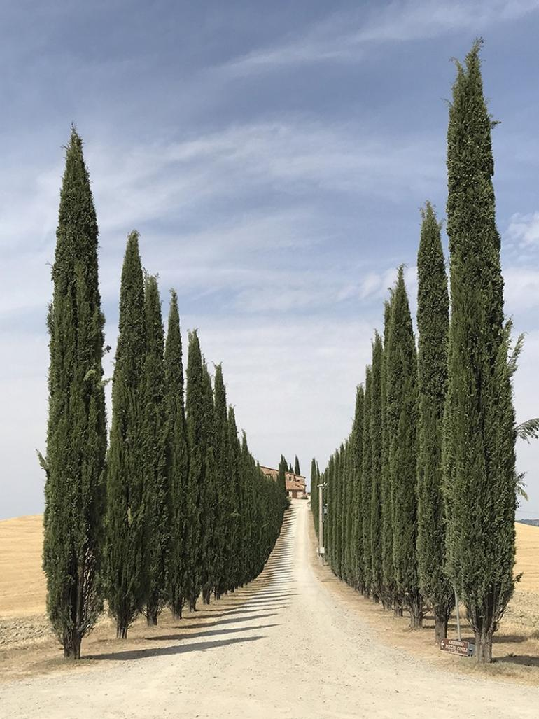 iphone photography The Best iPhone Photography of 2018 55 1st TREES Lidia Muntean