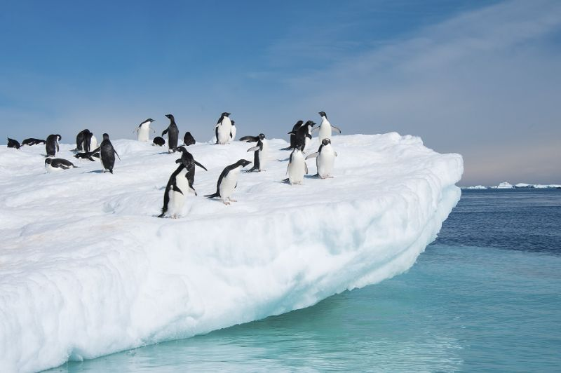luxury cruise Discover This Luxury Cruise in Antarctica Discover This Luxury Cruise in Antarctica 2